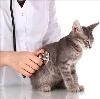 Ветеринарные клиники в Балабаново
